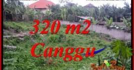 INVESTASI PROPERTY, TANAH MURAH di CANGGU DIJUAL TJCG231