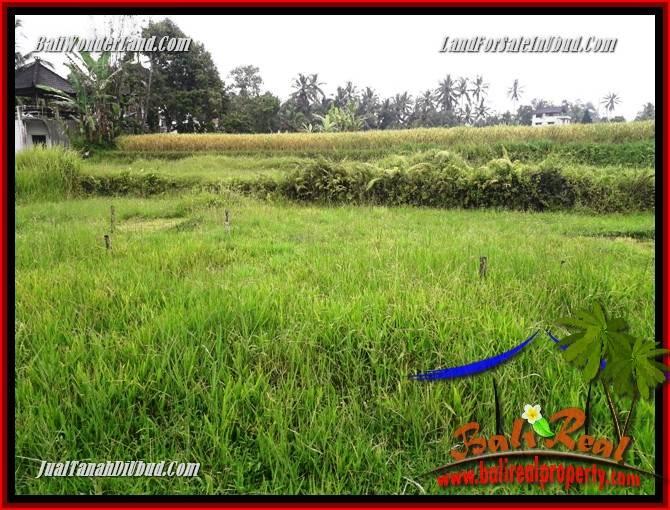 Dijual Tanah Murah di Ubud Bali 30 Are di Ubud Tegalalang