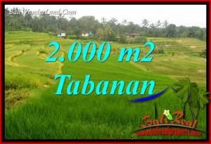 Tanah Murah di Tabanan jual 20 Are View Sawah