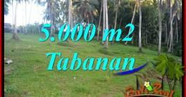 Investasi Properti, Dijual Murah Tanah di Tabanan Bali TJTB408