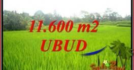 Dijual Murah Tanah di Ubud Bali 11,600 m2 di Ubud Tegalalang