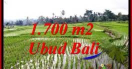 TANAH di UBUD DIJUAL MURAH Untuk INVESTASI TJUB770