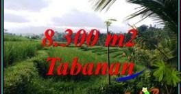 TANAH DIJUAL MURAH di TABANAN BALI TJTB501