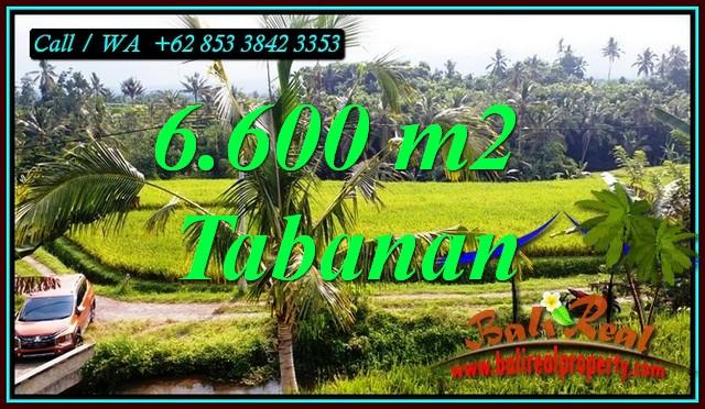 JUAL TANAH MURAH di TABANAN 6,600 m2 di PENEBEL TABANAN