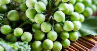 Health Benefits of Turkey berries.