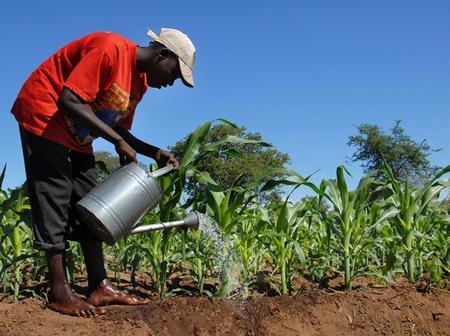 Twifo Ati-Morkwa Farmers