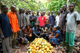 COCOA Farmers Voice Out