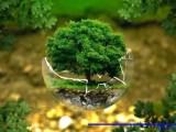Doğal dengenin korunması için neler yapabiliriz