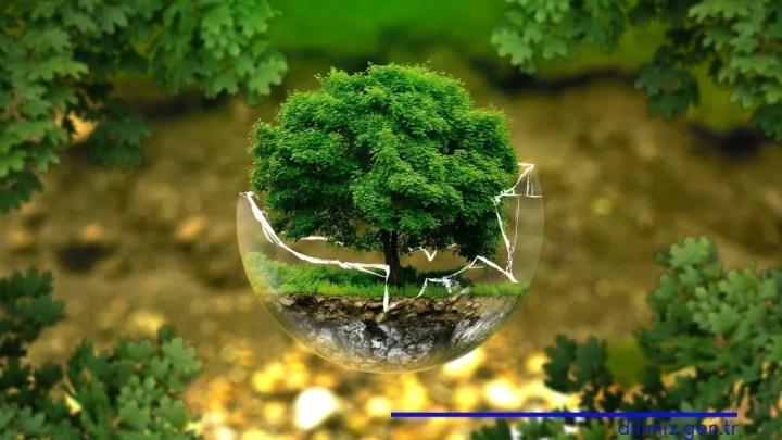 Doğal dengenin korunması için neler yapabiliriz?