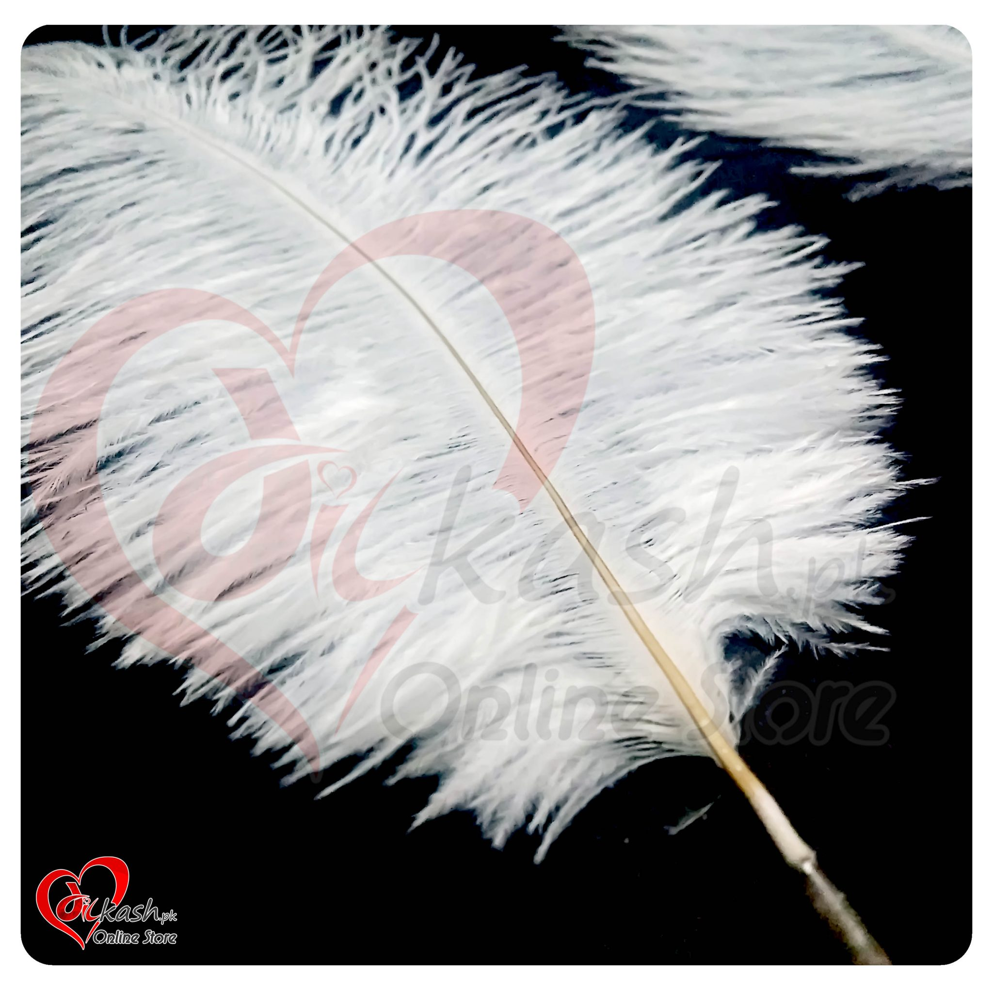 Ostrich Feathers - Feathers for Sale