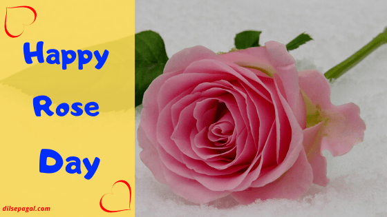 Rose Day Status – Rose day wishes – Quotes on Rose day