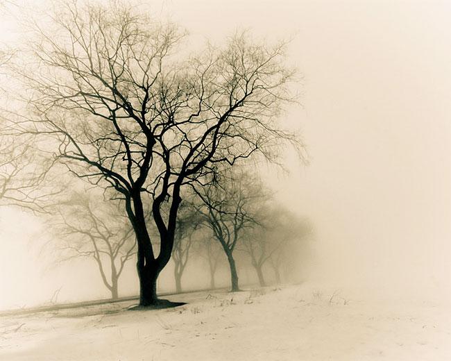 Janice Lin's Photography