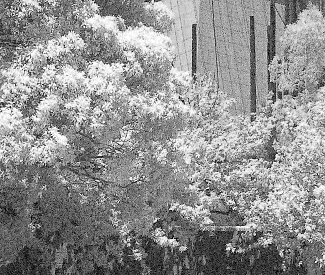 Infrared photography with the Nikon D3