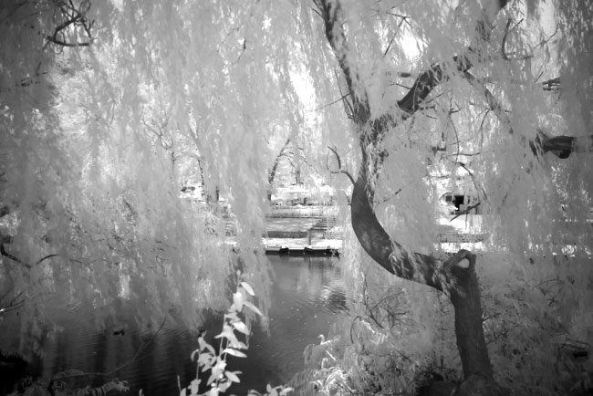 Infrared photography with the Pentax K100D