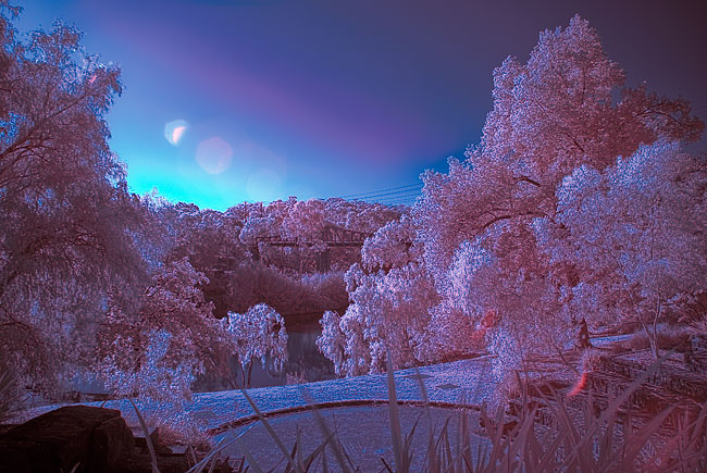 Pentax K200D false color infrared