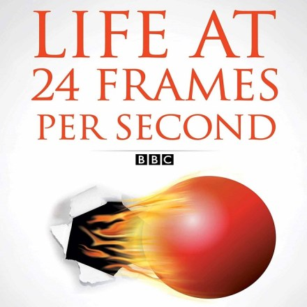 Life at 24 Frames a Second