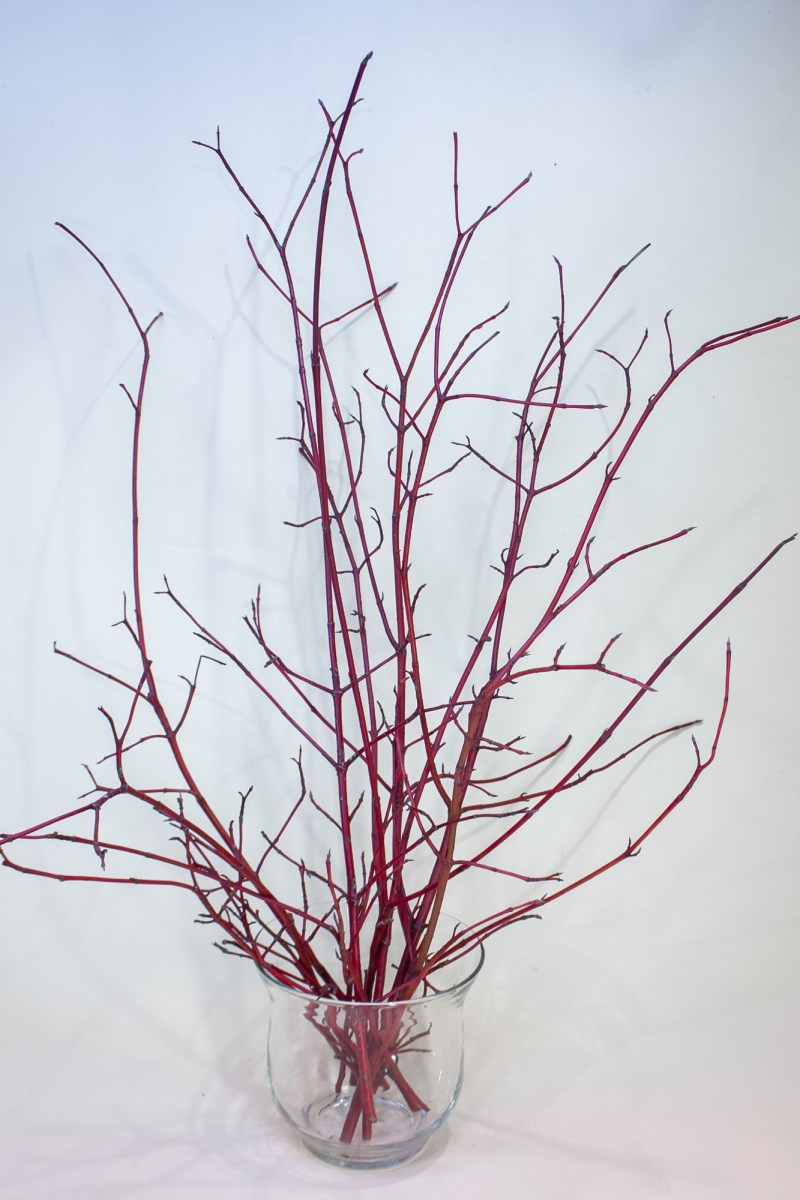 Sarkani grimoņa zari