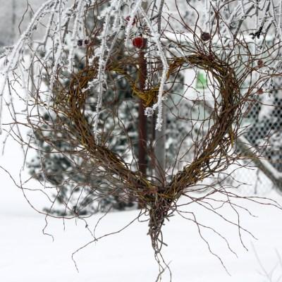 Sirds formas dekors, 'Tortuosa' vītols