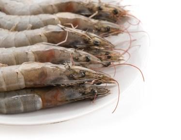 Allevamento di gamberi - Shrimp farm