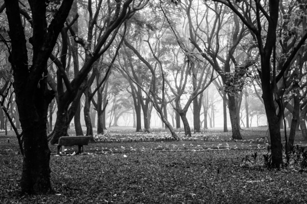The fog and the trees at Cubbon park, nothing can match them!