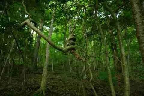 Δάσος Αοκιγκαχάρα, Ιαπωνία