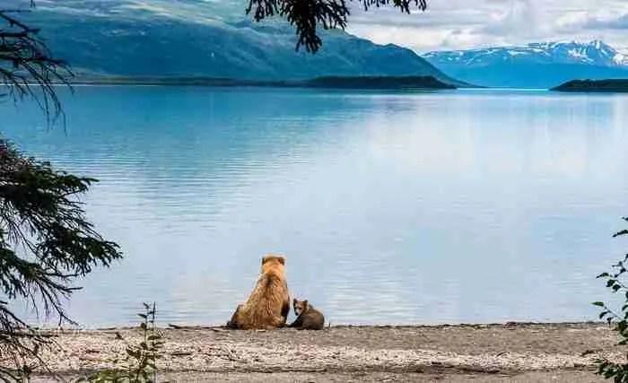 20 όμορφες μαμάδες αρκούδες φωτογραφίζονται μαζί με τα απίστευτα χαριτωμένα μικρά τους!