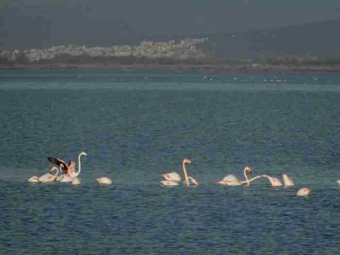 """Το ωραιότερο ψαροχώρι της Ελλάδας μοιάζει σαν να.. επιπλέει στο νερό. Βρίσκεται πάνω σε ένα μικροσκοπικό νησάκι στη μέση μιας """"κλειστής θάλασσας"""""""