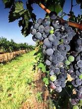 Wijnproeverij Den Haag – Italië