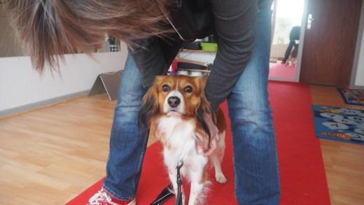 Diesel elsker at stå mellem sin førers ben, masser af trykhed, når man er en smule bekymret