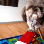 Hundeskolen: Selvtillid og Balance