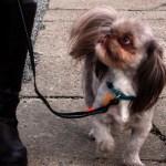 Udstyr til hundetræning – Hvad har du brug for