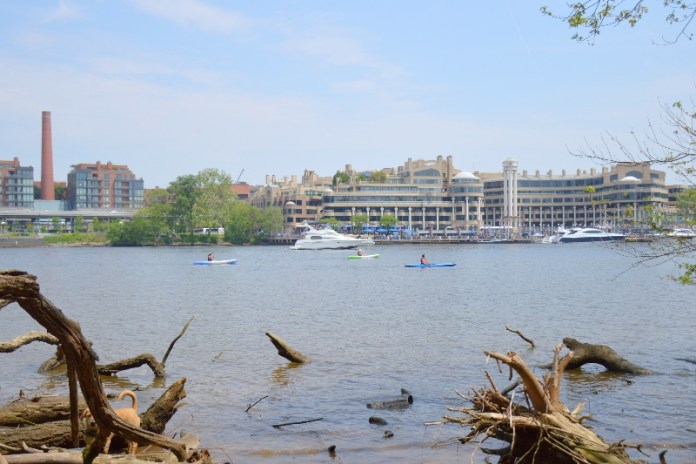 Things to do in Arlington heodore Roosevelt Island