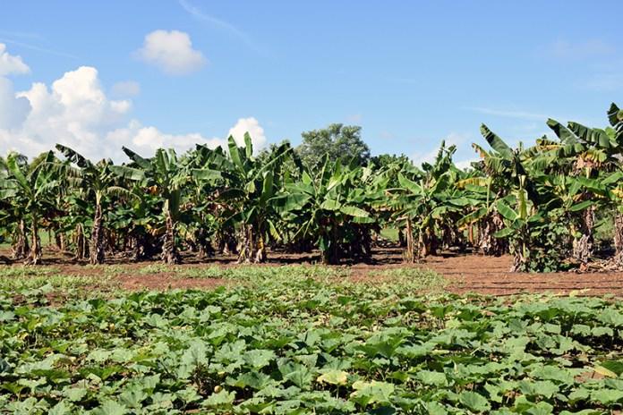 Royal Isabela Farm