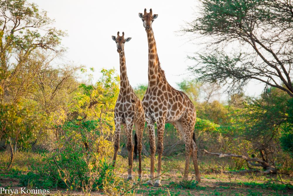 South African Escape Safari