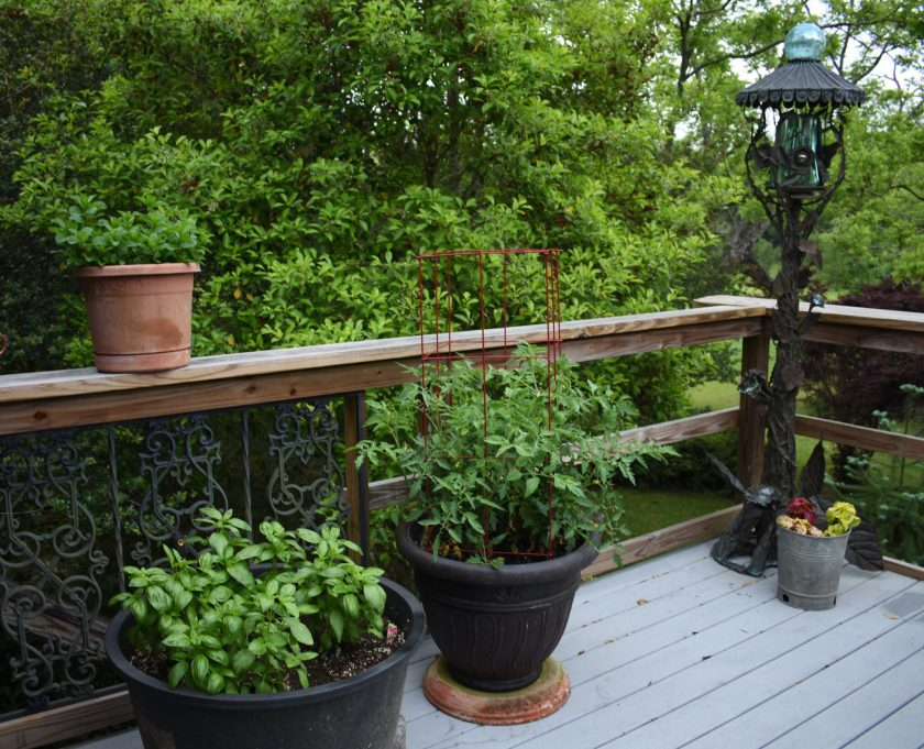 View of back deck with basil, tomatoes, mint and chives. Families enjoying the beach in water, fishing, paddling Picnic packed for a Picnic Worthy Roasted Poblano Corn Salad www.diningwithmimi.com