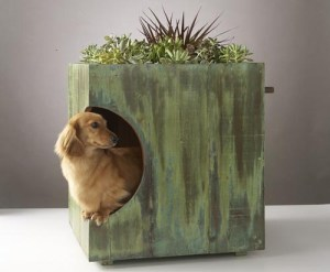 green-roof-dog-house