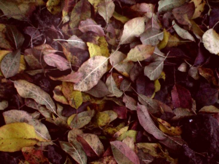 Ce poti face cu frunzele din gradina?