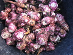 Topinambur - legume si ierburi care se regenereza - legume perene
