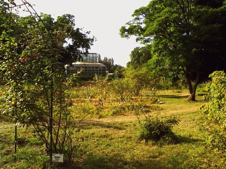 Gradina Botanica din Bucuresti, o dezamagire