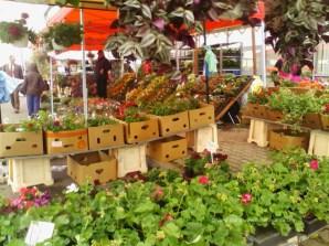 targul-de-flori-arad-2
