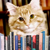 Bob si Dewey. Doi motani. Doua povesti de viata. Doua romane cu pisici. (II)