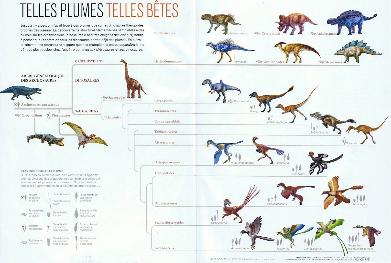 Dinosaur Evolution Sheets Dinosaurs Pictures And Facts