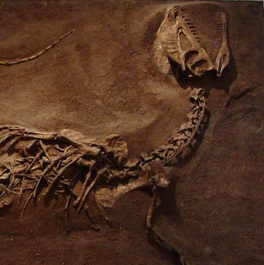 How Jurassic Park Cheated One Particular Dinosaur