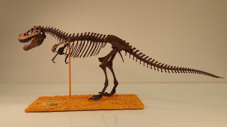 museum quality dinosaur fossil replicas