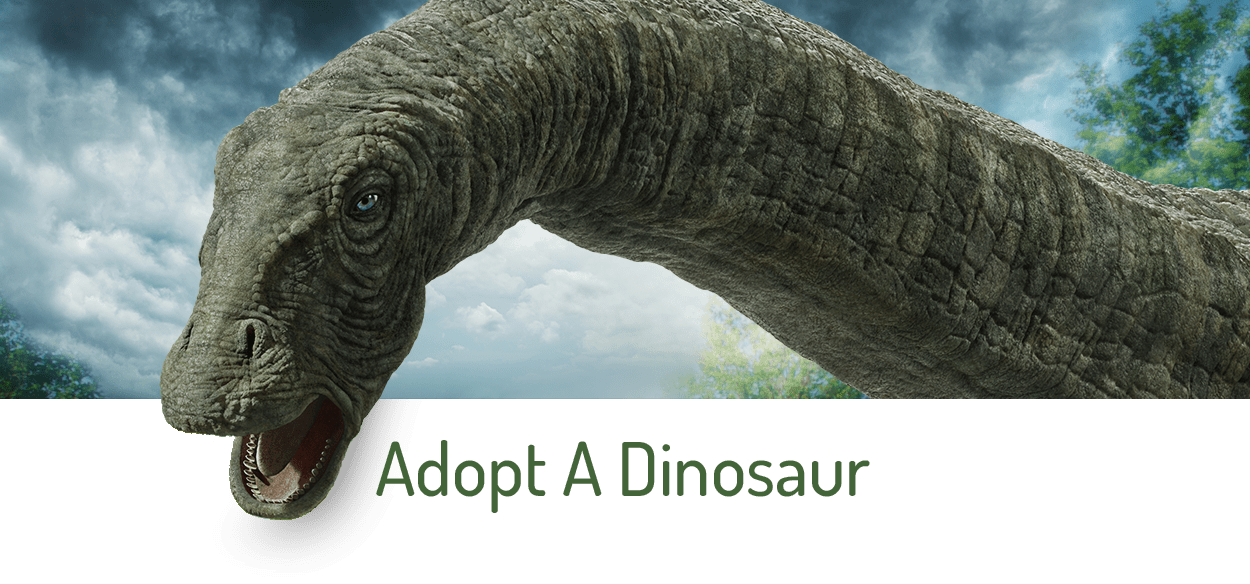 Adopt A Dinosour