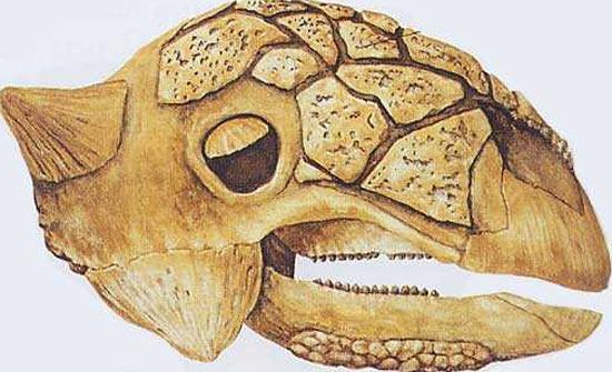Euoplocephalus