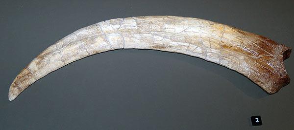 Griffe de Therizinosaurus
