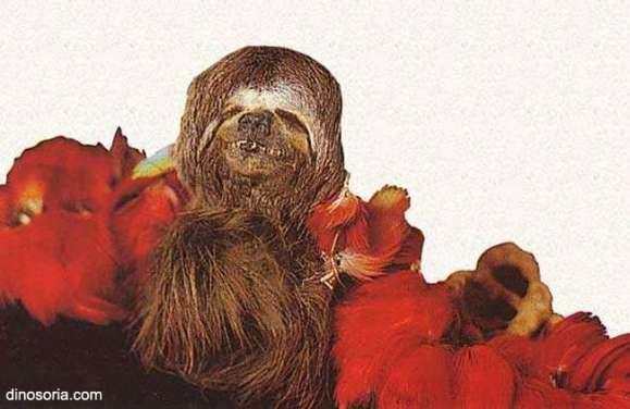 Tete réduite Jivaros d'un singe