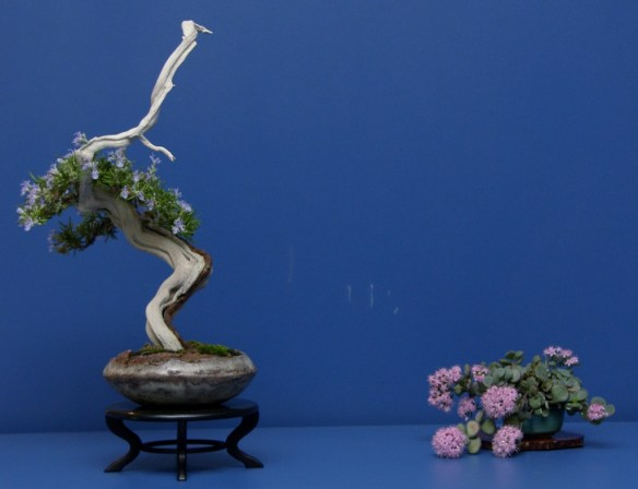 aromas bonsai romero