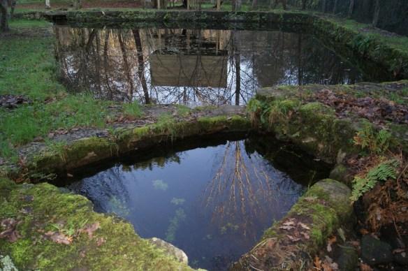 estanque  reflejo